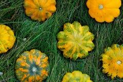 Gula Pattypan squashar på gräs fotografering för bildbyråer