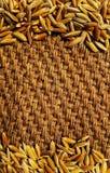 Gula risfältjasminris på gammal skrynklig säckvävbakgrund Royaltyfria Foton