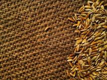 Gula risfältjasminris på gammal skrynklig säckvävbakgrund Arkivfoto