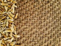 Gula risfältjasminris på gammal skrynklig säckvävbakgrund Royaltyfri Foto