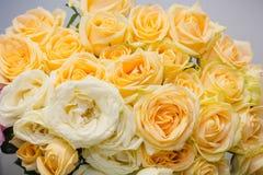 Gula ro Det är mycket gula rosor Arkivfoto