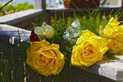 Gula rosor i bröllopgazebo Arkivfoton