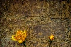 Gula rosor mot en gammal vägg royaltyfri fotografi