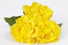 Gula rosor på vit bakgrund Arkivbild