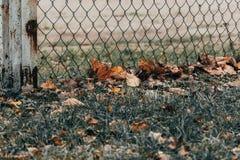 Gula sidor på grönt gräs nära ingreppsstaketet arkivbild