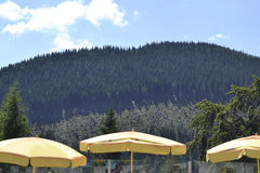 Gula slags solskydd i det Schneeberg berget - lägre Österrike Royaltyfri Foto