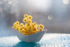 Gula små bollar av mimosablommor i ett pappers- fartyg på en blå bakgrund med bokeh arkivbild