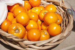 Gula tomater Arkivfoto