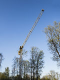 Gula träd för för konstruktionstornkran och gräsplan mot blå himmel Arkivbilder