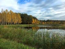 Gula träd och en härlig sjö under molnen arkivfoto