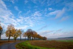 Gula träd och väg Arkivfoto
