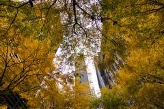 Gula träd Zuccotti Park royaltyfri fotografi