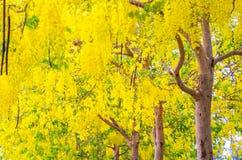 Gula tropiska blommor på trädet royaltyfri foto