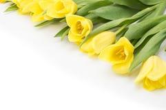 Gula tulpan med det gula bandet på beiga Royaltyfri Foto