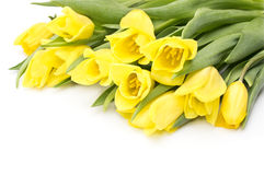 Gula tulpan med det gula bandet på beiga Royaltyfria Bilder