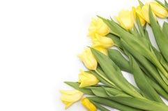 Gula tulpan med det gula bandet på beiga Royaltyfri Fotografi