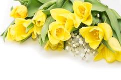 Gula tulpan med det gula bandet på beiga Royaltyfria Foton