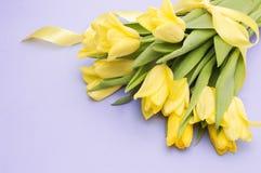 Gula tulpan med det gula bandet på lilor Royaltyfri Foto