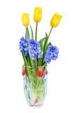 Gula tulpan och hyacint i vasen som isoleras på vit Royaltyfria Bilder