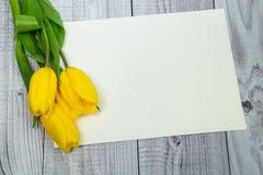 Gula tulpan och ljust papper Arkivfoton