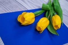 Gula tulpan på blå backgroun Royaltyfri Bild
