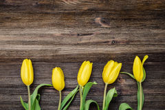 Gula tulpan på träbakgrund Fotografering för Bildbyråer