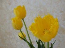 Gula tulpanblommor på en gul pastellfärgad bakgrund royaltyfria foton