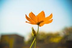 Gula tusenskönor för bakgrund, färgrikt universum Ett härligt och en ch Fotografering för Bildbyråer