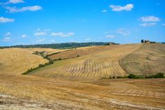 Gula vetefält av Tuscany, Italien, efter skörd fotografering för bildbyråer