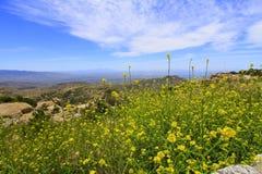 Gula vildblommor och öken med Santa Catalina berg i bakgrund arkivfoto