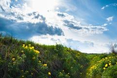 Gula vildblommor på bakgrund av blå molnig himmel Royaltyfria Bilder