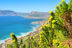 Gula wild blommor, berg, havet beskådar Arkivbild