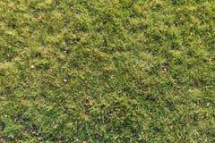 Gulaktigt grönt gräs i sen höst arkivbild
