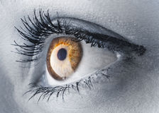 guld- öga Arkivfoto