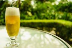 Guld- öl Fotografering för Bildbyråer