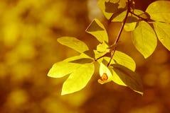 guld- arkivfoton