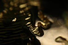 guld- abstrakt bakgrund Fotografering för Bildbyråer