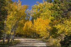Guld- asp på Casper Mountain Wyoming Arkivfoton