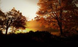 Guld- Autumn Sunrise i det dimmiga träsket royaltyfri foto
