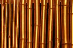 guld- bambu Royaltyfri Fotografi