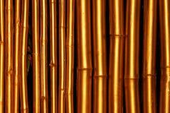 guld- bambu Arkivbild