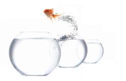 guld- banhoppning för fisk Royaltyfria Bilder