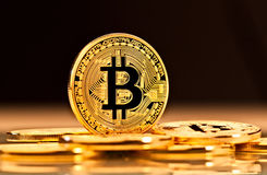Guld- Bitcoin mynt royaltyfri bild