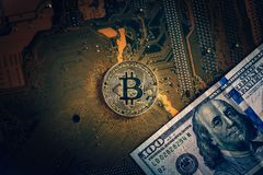 Guld- bitcoincryptocurrency på boa för elektronisk strömkrets för dator Royaltyfria Bilder