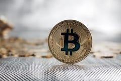 Guld- bitcoinmynt Royaltyfri Fotografi