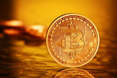 Guld- Bitcoins royaltyfri foto