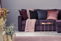 Guld- blomkrukor och soffa Arkivfoton