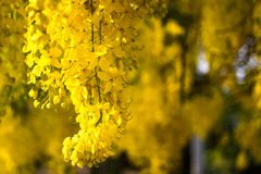 guld- blomma Royaltyfri Bild