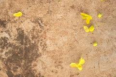 Guld- blommanedgång på betong Royaltyfri Bild