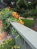 Guld- blommor i parkera Arkivfoto